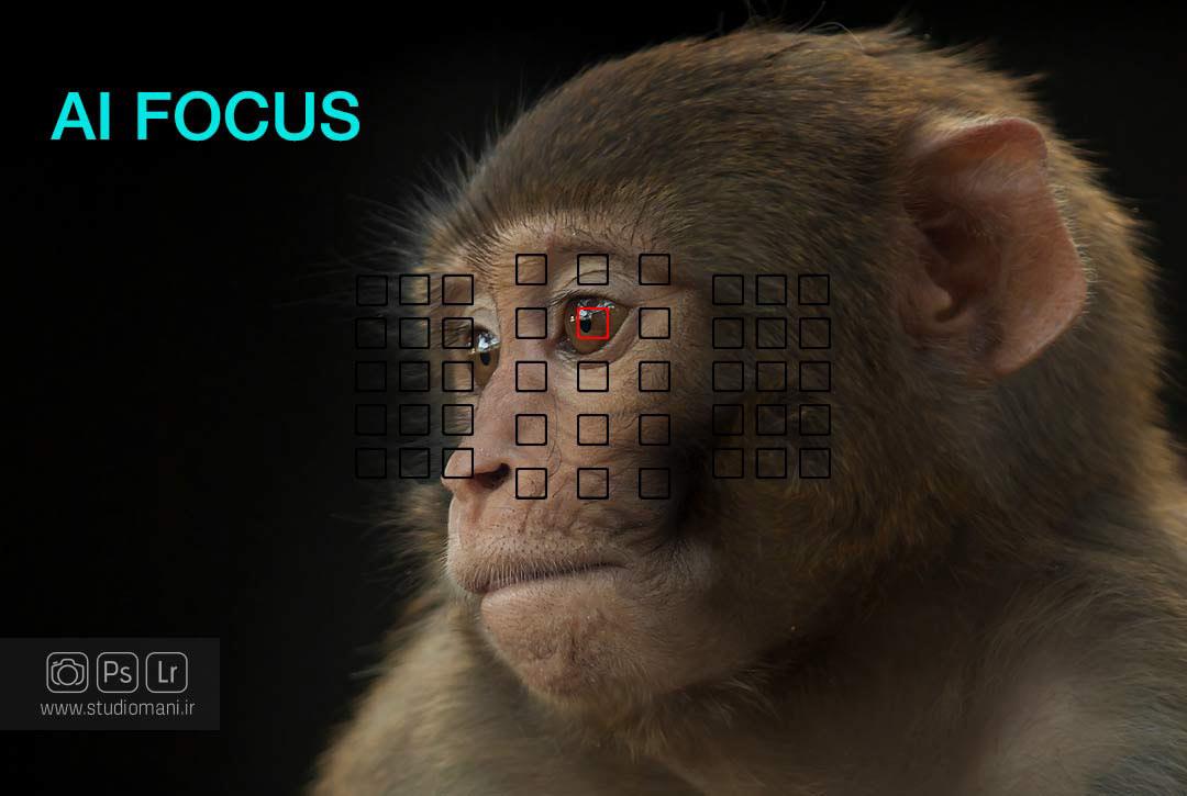 فوکوس ترکیبی-واژه نامه عکاسی