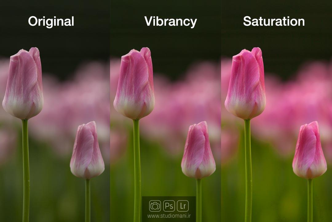 ویبرانس- واژه نامه عکاسی