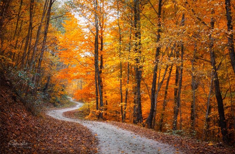 عکاسی مناظر پاییز