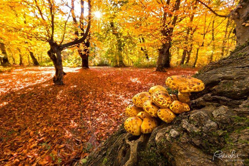 آموزش عکاسی مناظر پاییز