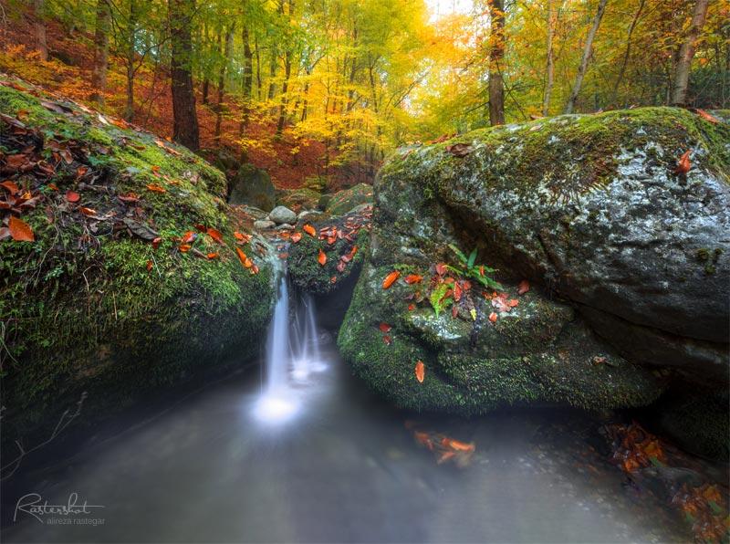 عکاسی جنگل در پاییز